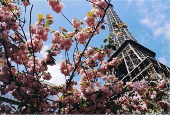 paris-flowers-eiffel-tower